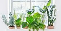PLANT LADY / plants, indoor garden, plant obsession, houseplants, greenery, gardening