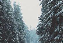 t winter