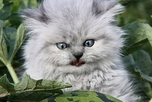Cats, kitties, and felines / by Laura Palka