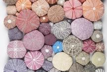 Colour Trends 2012