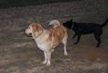 Mis Perros