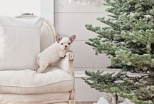 Christmas & New Year / by Brandi Montgomery