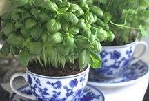 Herb  & Container Gardens / Indoor & Outdoor / by Kim Harris