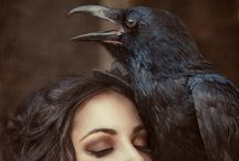 """Quoth the Raven... / Ravens...There is something about this majestic bird ...  Wisdom - Knowing - The Past & The Future. (Ravens and Magpies are part of the Crow family ...).   Counting Crows: """"One for sorrow, two for joy..."""" / by Kim Harris"""
