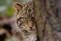 Endangered Species / by Laura Palka