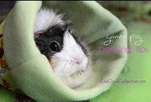 Guinea, Guinea, Guinea ❤️ / All about Guinea Pigs (Cavies) / by Kim Harris