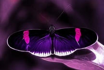 Butterflies / ~Caterpillars do all the work and butterflies get all the publicity. Beautiful creatures they are!!~ / by Robin Adams