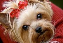 Little Doggies / by Robin Adams