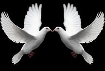 Doves / by Robin Adams