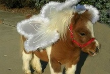 Mini Horses! / Miniature Horses come in all sizes, shapes, colors, and temperaments – but one thing in common: they are too darn cute!