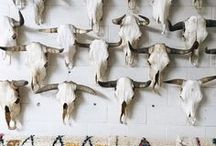 Decor with taxidermy (antlers, feathers, and hides) / If you're a hunter or you married one. :)