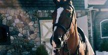 lovak / lovakról!! I love horses!