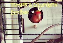 Tomris & Oburiks'in Dünyası / Agapornis / Lovebird / Sevda Papağanı