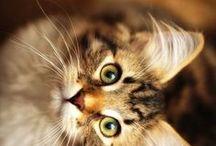 べ × Cats × べ