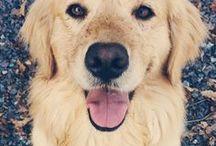 ওㄨ Dogs ㄨও