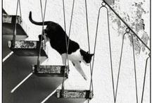 cat cat cat / by imp 125