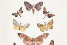 fauna & flora / by Irma Rivera