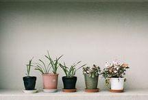 Greenleaf / When plants make an apperance / by Yudi Ela