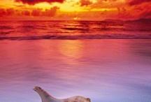 The Ostentatious Ocean / by Ree Ann Stepp