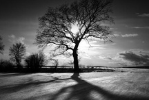 Tremendous Trees / by Ree Ann Stepp