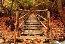 Beautiful Bridges / by Ree Ann Stepp