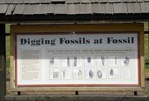 Fossil, Oregon / by Ree Ann Stepp