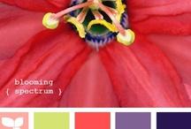 Color palettes / by Elizabeth Young