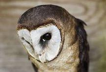 Owls / ○ fascination ○ / by Andrea Mackova