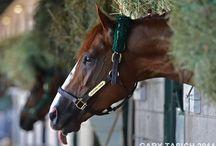 horse / by Amanda Price