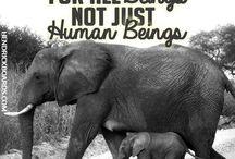 Don't hurt animals