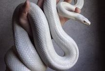 Snakes♥