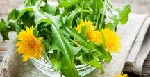 Homesteading: Wild Edibles / Edible plants on your homestead for you to forage. Information on which plants are save to eat. Plants from mushrooms, nettle, acorns, flowers, and more.