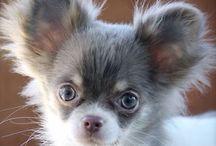 Cani super cute