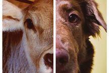 mercy of animals