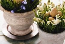 Spring Decorating / by Melanie Souza Guffey