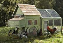 Chickens!!!