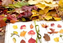 Seasonal celebrations / Inspirations and ideas for celebrating summer, fall, winter, spring.