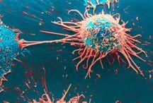 Viruses /Microorganisms