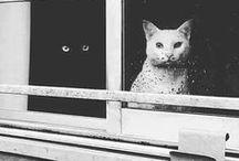Cats  ღ