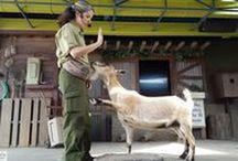 Disney's Animal Kingdom Park
