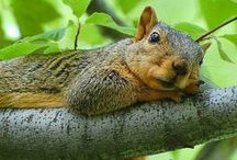 Oh Nuts........ / The life & times of my furry favorite~ / by Wanda Haynes