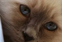 Cats & Kittens     So cute♥    