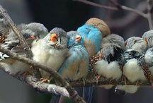 Uccelli / Tutte le immagini di Uccelli