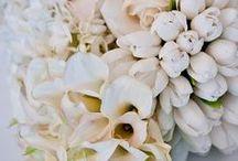 Birch Blooms Portfolio / A portfolio of our work