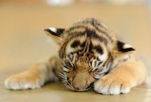 Cute Animals / by Debbie Farley