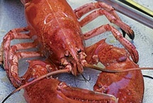 Lobstah / by JP Armstrong