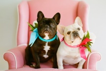 Dogs and Decor / Design Has Gone to the Dogs