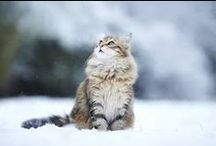 In the snow /  snoooow