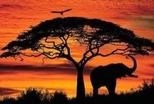A far off place / All about Africa ... my dream travel destination. / by Marie-France Lamothe