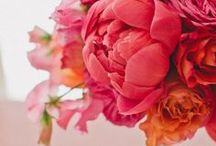 -- Flowers --